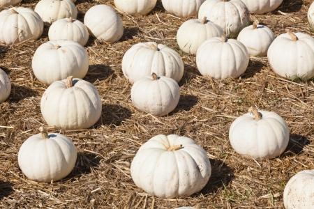 Having fun on pumpkin patch on sunny Saturday morning.