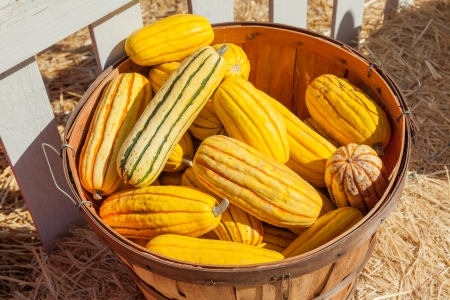 Delicata squash (Cucurbita pepo var. pepo Delicata) is a winter squash with distinctive longitudinal dark green stripes on a yellow or cream colored background and sweet, orange-yellow flesh.