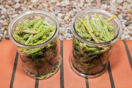 Syrup made of pine sprouts is natural remedy our great-grandmothers prepare to treat coughs and catarrh Stock Photo