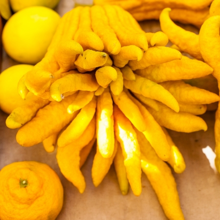 Buddha's hand, Citrus medica var. sarcodactylis  is a fragrant citron variety whose fruit is segmented into finger-like sections. Standard-Bild