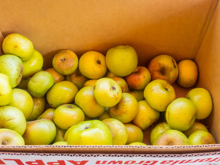 tinge: Box of organic Newtown Pippin apples for sale at local farmers market  Newtown Pippin is typically light green, sometimes with a yellow tinge  Stock Photo