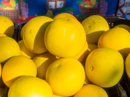 pith: Pile of organic pomelos for sale at local farmers market.