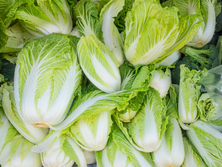 Pile of organic napa cabbage for sale at local farmers market. Stock Photo