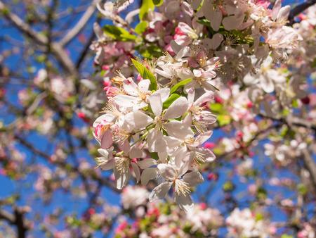 begining: Fiore bianco allegro su un albero nel parco agli inizi della primavera