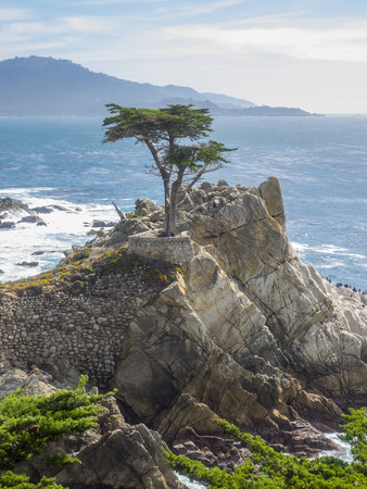 Standing on a granite hillside off California's scenic 17-mile drive in Pebble Beach, the Lone Cypress is a western icon, and has been called one of the most photographed trees in North America.