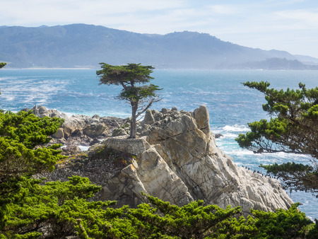 Standing on a granite hillside off Californias scenic 17-mile drive in Pebble Beach, the Lone Cypress is a western icon, and has been called one of the most photographed trees in North America. photo