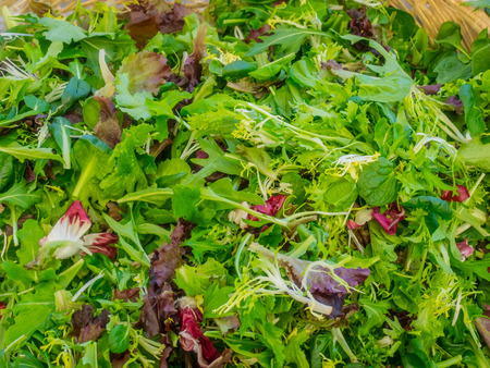 Fresh organic baby mixed salad greens for sale at local farmers market.