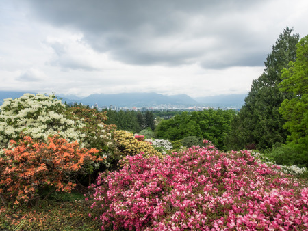 Queen Elizabeth Park is a municipal park located in Vancouver, British Columbia, Canada, on Little Mountain