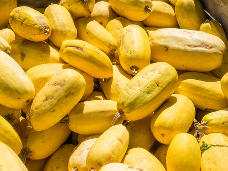 oblong: Spaghetti Squash is a small, watermelon-shaped variety, ranges in size from 2 to 5 pounds or more. It has a golden-yellow, oval rind and a mild, nutlike flavor.