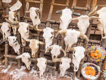 Real cow skulls with horns on rack for sale photo