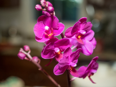 is well known: Phalaenopsis orchids are well known for their relatively large bloom size and striking colors.