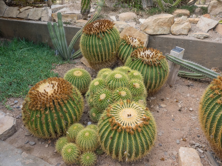 habitats: Living Desert Zoo and Gardens State Park is a zoo and botanical garden displaying plants and animals of the Chihuahuan Desert in their native habitats. It is located off U.S. Route 285 at the north edge of Carlsbad, New Mexico. Stock Photo