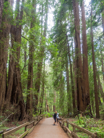 muir: Muir Woods National Monument is an old-growth coastal redwood forest.