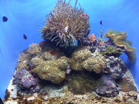 Large saltwater aquarium displaying tropical coral reef ecosystem. Stock Photo