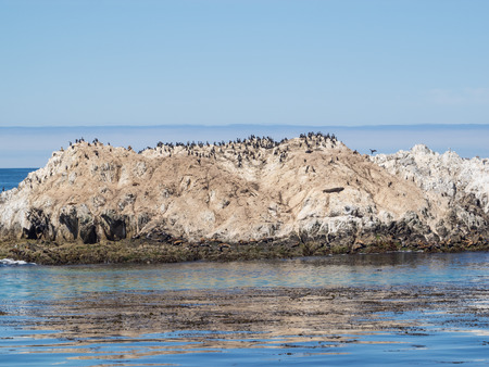 lions rock: Bird Rock is one of the most popular stops along the 17-Mile Drive. There are hundreds of birds, harbor seals and sea lions there.