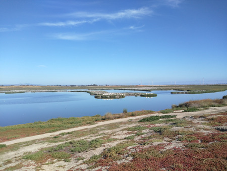undisturbed: Palo Alto Baylands Nature Preserve is the largest tract of undisturbed marshland remaining in the San Francisco Bay. Fifteen miles of multi-use trails provide access to a unique mixture of tidal and fresh water habitats. Stock Photo