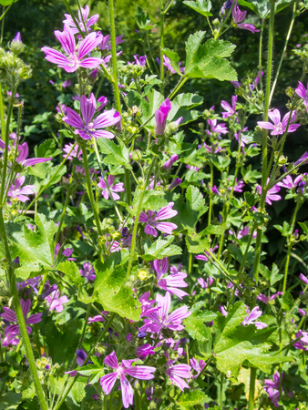 perennial plant: Meadow cranesbill (Geranium pratense) is a species of hardy flowering herbaceous perennial plant in the genus Geranium and family Geraniaceae.