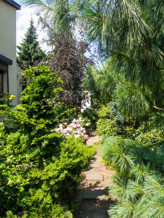 landscaped garden: Beautiful landscaped garden with various shrubs and trees.