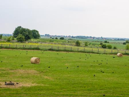 baler: Hay or straw bale in a field, bound by a baler.