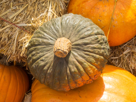 deeply: Jarrahdale Pumpkin is flattened like Cinderella but with a light bluegrey color. Deeply ribbed. Stock Photo