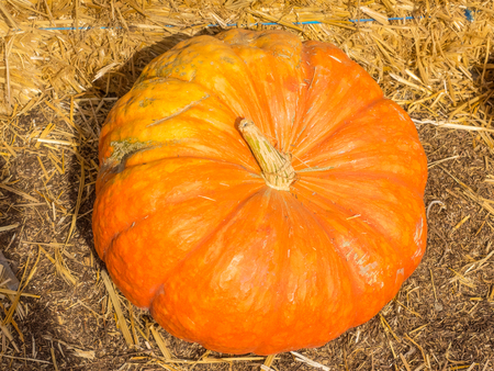lobed: Cinderella pumpkins have a vivid, red-orange, hard exterior and a somewhat flattened shape with deep, characteristic lobes. Stock Photo