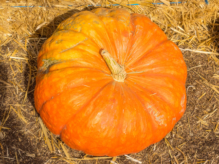 characteristic: Cinderella pumpkins have a vivid, red-orange, hard exterior and a somewhat flattened shape with deep, characteristic lobes. Stock Photo