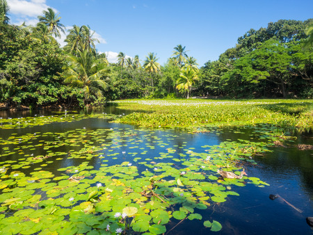 brackish water: Anchialine pool and wetlands adjacent to Punaluu Beach