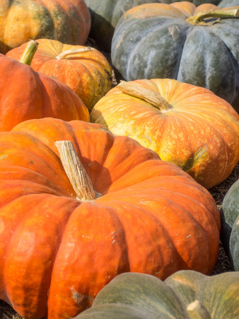 lobes: Cinderella pumpkins have a vivid, red-orange, hard exterior and a somewhat flattened shape with deep, characteristic lobes. Stock Photo