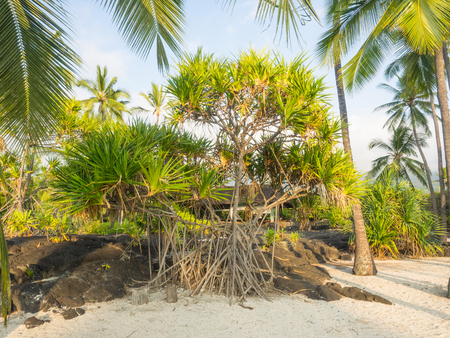 Puuhonua o Honaunau National Historical Park preserves the site where, up until the early 19th century, Hawaiians who broke a kapu (one of the ancient laws) could avoid certain death by fleeing to this place of refuge. Stock Photo