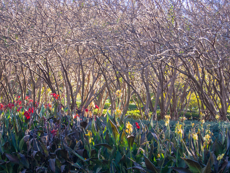 arboretum: Dallas Arboretum and Botanical Garden is botanical garden located at 8617 Garland Road in East Dallas, Dallas, Texas, on the southeastern shore of White Rock Lake.