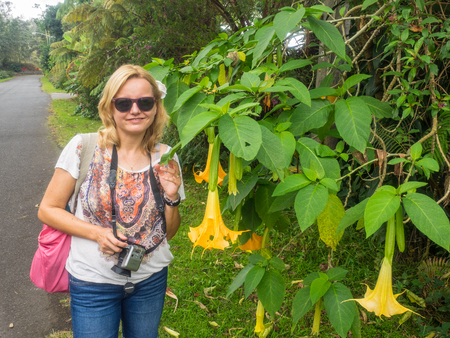 versicolor: Angel�s Trumpets (Brugmansia versicolor) is a species of plant in the Solanaceae family. Stock Photo