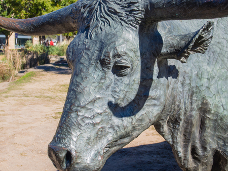 longhorn cattle: Large sculpture commemorates nineteenth century cattle drives that took place along the Shawnee Trail, the earliest and easternmost route by which Texas longhorn cattle were taken to northern railheads.