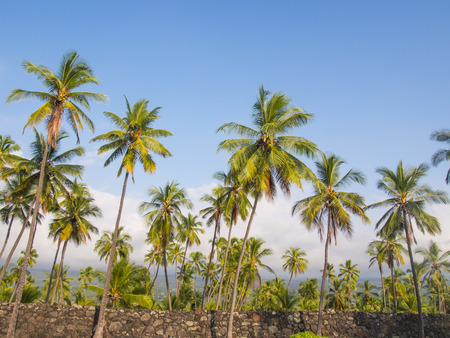fleeing: Puuhonua o Honaunau National Historical Park preserves the site where, up until the early 19th century, Hawaiians who broke a kapu (one of the ancient laws) could avoid certain death by fleeing to this place of refuge. Stock Photo