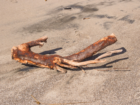 tides: Driftwood is wood that has been washed onto a shore or beach of a sea, lake, or river by the action of winds, tides or waves. It is a form of marine debris or tidewrack. Stock Photo