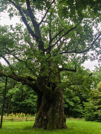 wielkopolska: Rogalin Palace gardens are especially famous within this group are the oaks carrying the names of the legendary Slav brothers, Lech, Czech and Rus.