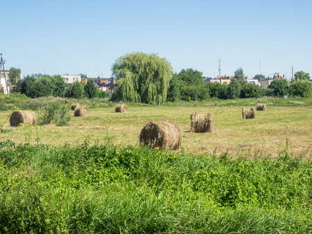 Round bales are harder to handle than square bales but compress the hay more tightly. Stock Photo