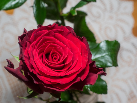 Beautiful red rose on a table with white tablecloth.