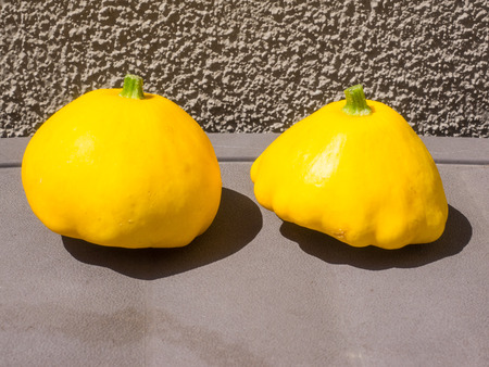 platillo volador: Pattypan squash is a variety of summer squash (Cucurbita pepo) notable for its small size, round and shallow shape, and scalloped edges, somewhat resembling a small toy top, or flying saucer.