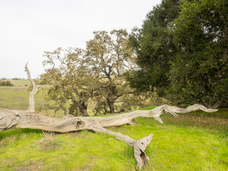 Arastradero Preserve is a nature preserve that protects most of the Arastradero Creek watershed.