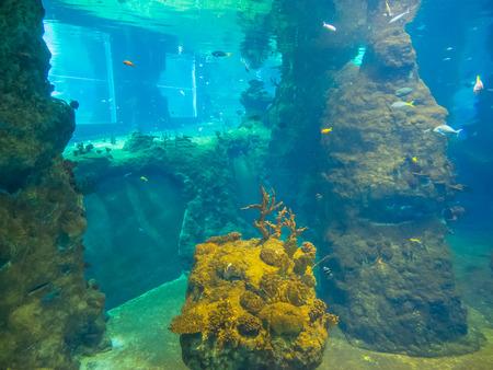 Africarium は海洋水族館水生生態系 (海洋および淡水) を提示とヴロツワフ動物園のアフリカの陸上動物です。 写真素材