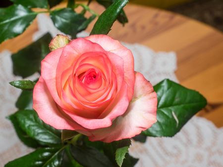Beautiful pink rose on a table with white tablecloth.