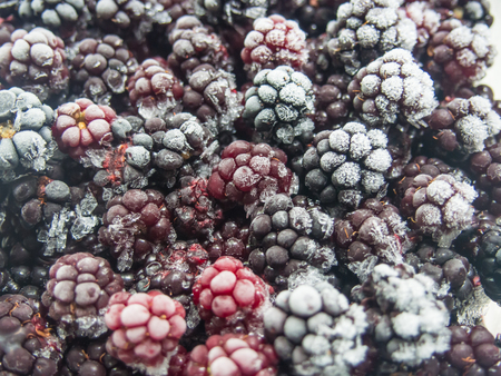 Blackberry is an edible fruit produced by many species in the Rubus genus in the Rosaceae family