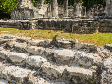 엘 레이 유적은 칸쿤의 호텔 존 (Hotel Zone of Cancun)에 위치하고 있으며 중요한 고대 마야 (Maya) 무역 루트의 일부입니다. 에디토리얼