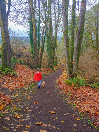 Somerset Greenbelts is 6 acres of trails. A natural area with a system of maintained trails that connect to other open space sites including Westwood Highlands Greenbelt and Forest Hill Park. Reklamní fotografie