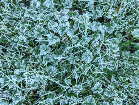 Hoar frost refers to white ice crystals deposited on the ground or loosely attached to exposed objects, such as wires or leaves