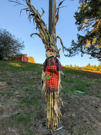 Scarecrow is a decoy or mannequin, often in the shape of a human. Stock Photo
