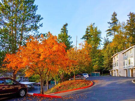 Fall colors in Factoria neighborhood in Bellevue, WA