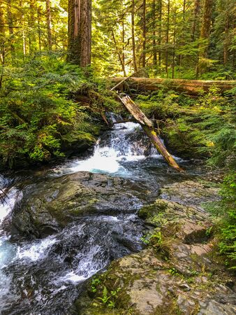 Lake Twentytwo is the center of an oasis of alpine wetland nestled on the northern shoulder of Mount Pilchuck. The hike to the lake combines the best of mountain rainforests, old-growth, wetlands, and mountain views, yet it is readily accessible.