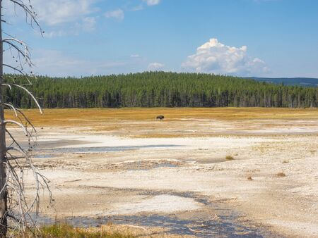 Fountain Paint Pot is a mud pot located in Lower Geyser Basin in Yellowstone National Park. Banque d'images - 132280685