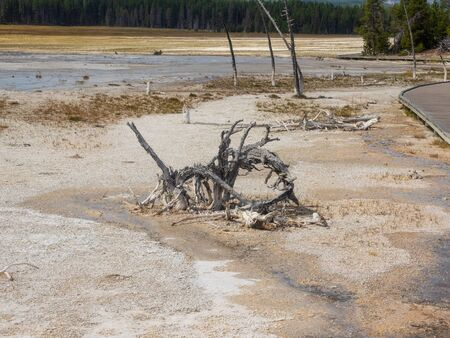 Fountain Paint Pot is a mud pot located in Lower Geyser Basin in Yellowstone National Park.